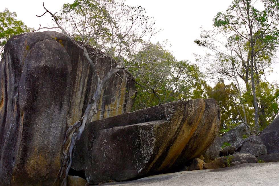 Granite Gorge Wanderung - bunte Gesteinsbrocken & bizarr wurzelnde Bäume - Cairns - Queensland