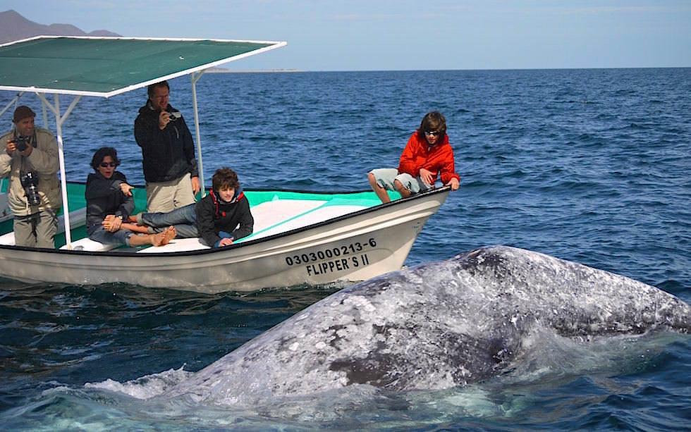 Bahia Magdalena Grauwale Baja California