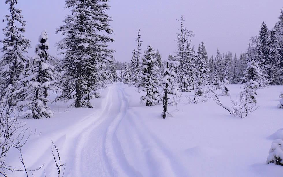 Winterlandschaft in schwedisch Lappland