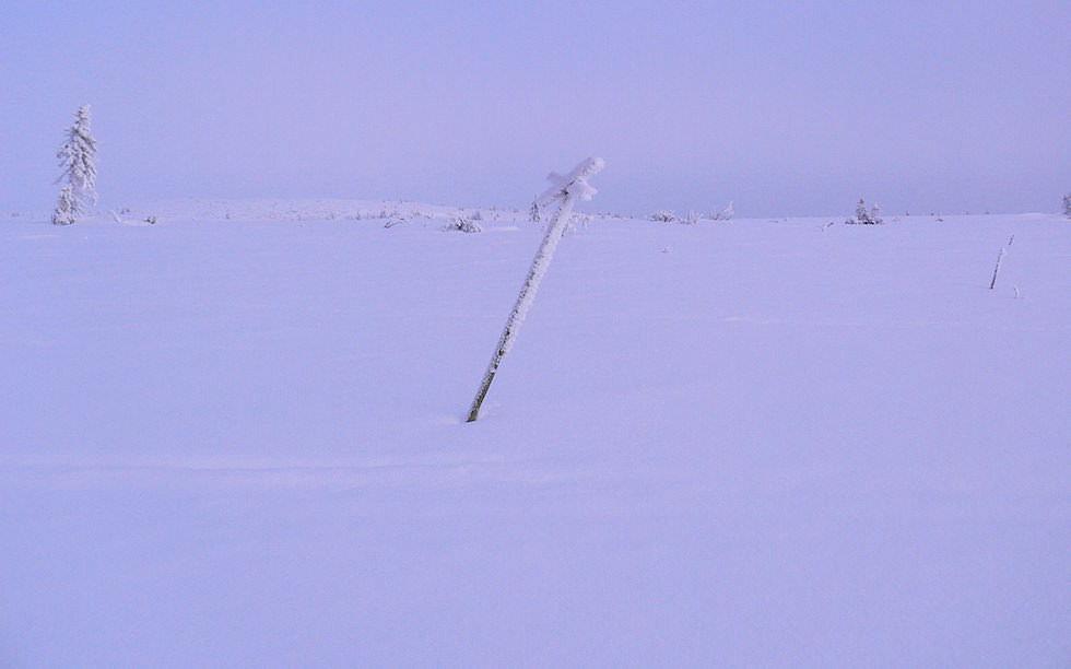 Verschneite Anhöhe - Husky Schlittentour in Schwedisch Lappland
