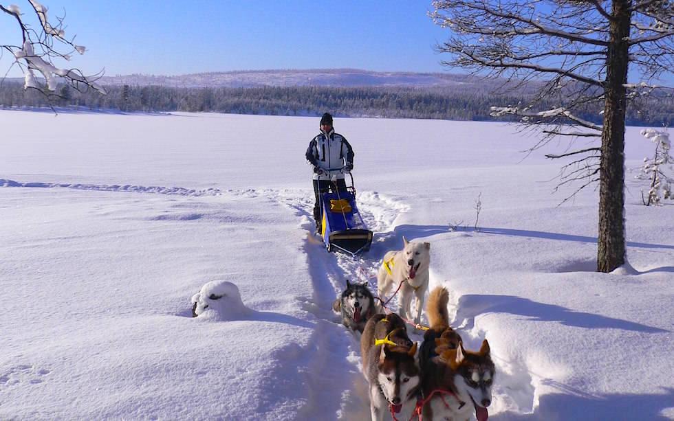 Husky Abenteuer in Schwedisch Lappland