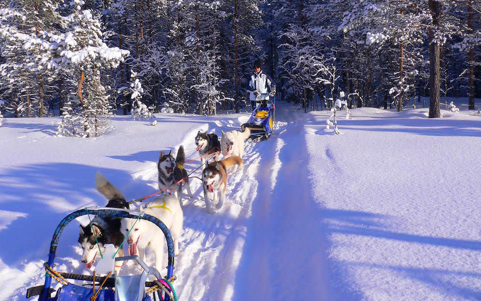 Husky Sledge Tour Swedish Lappland - Hundeschlitten Touren