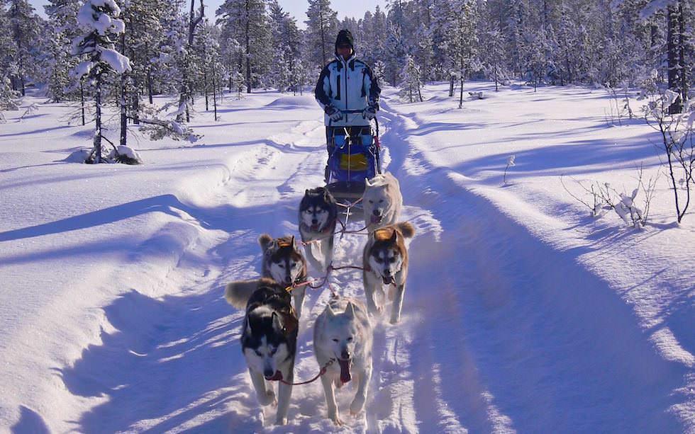 Husky Abenteuer Lappland - Hundeschlitten Touren selbst fahren - Schwedisch Lappland