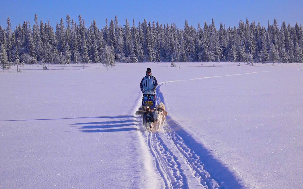 Husky Adventure Lappland - Hundeschlitten Touren mit Expeditionscharakter