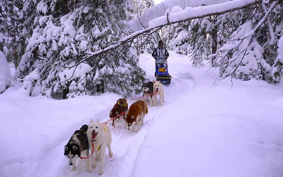 Verschneite Wäler - Husky Abenteuer Lappland - Hundeschlitten Touren