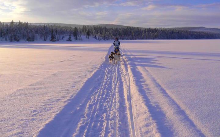 Schwedisch Lappland - Atemberaubend: Winter Husky Schlitten-Tour mit selbstgesteuertem Schlitten - Winter von seiner schönsten Seite erleben