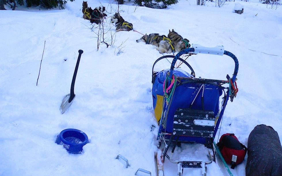 Am frühen morgen - Lappland Husky Abenteuer