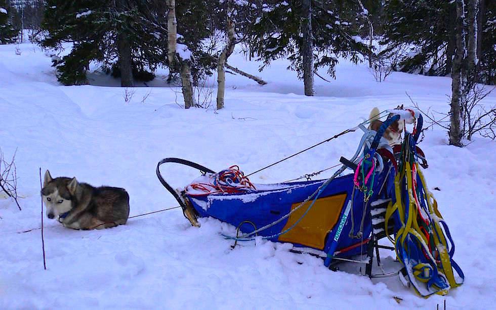 Husky Schittentour Lappland - früh morgens