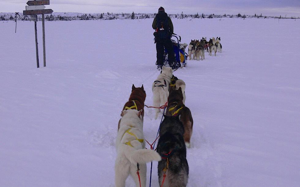 Kein Track - Husky Schlittentour Lappland