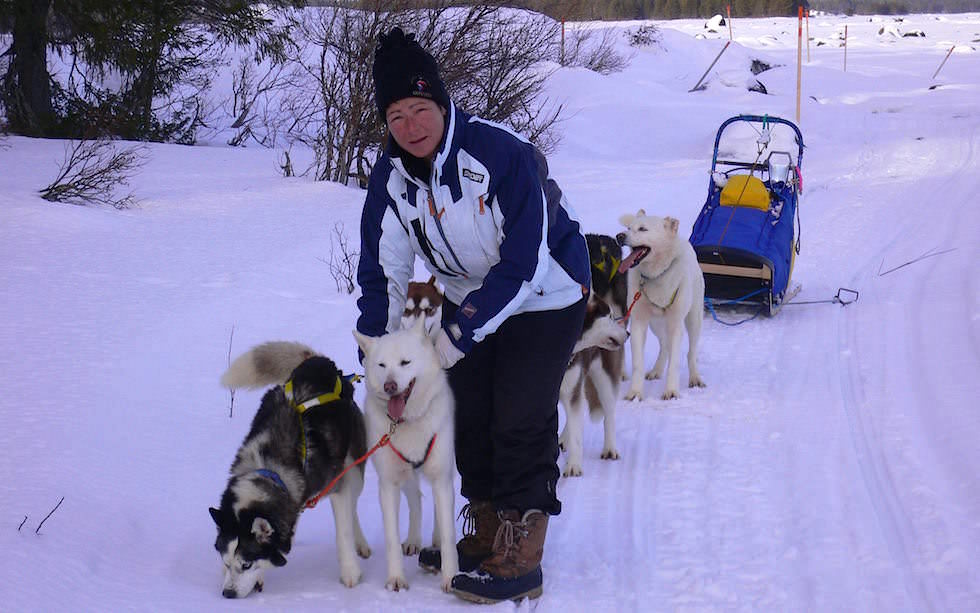 Husky Sledge Adventure Lappland