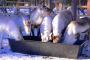 Lappland im Winter – Teil 3: Rentiere, Eisfischen, Polarlichter, Schneemobil & Kultur der Samen