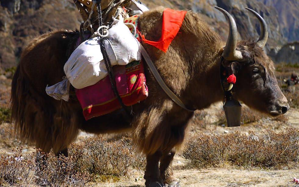 Nepal - Himalaya Trekking