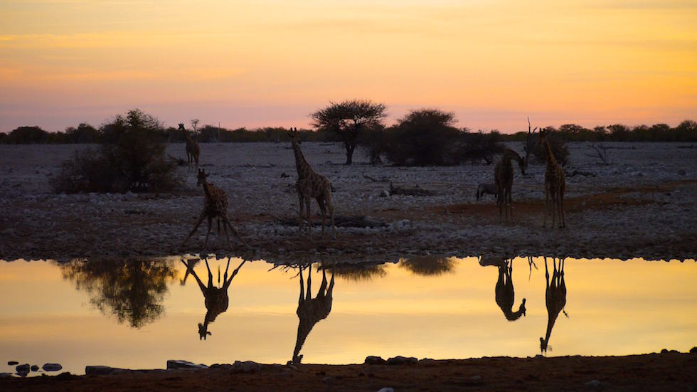 Water hole at sunset Etosha National Park in Namibia, Africa
