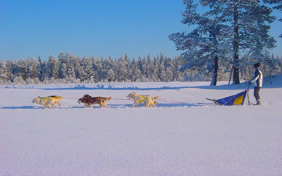Husky Sledge Tour in Swedish Lappland