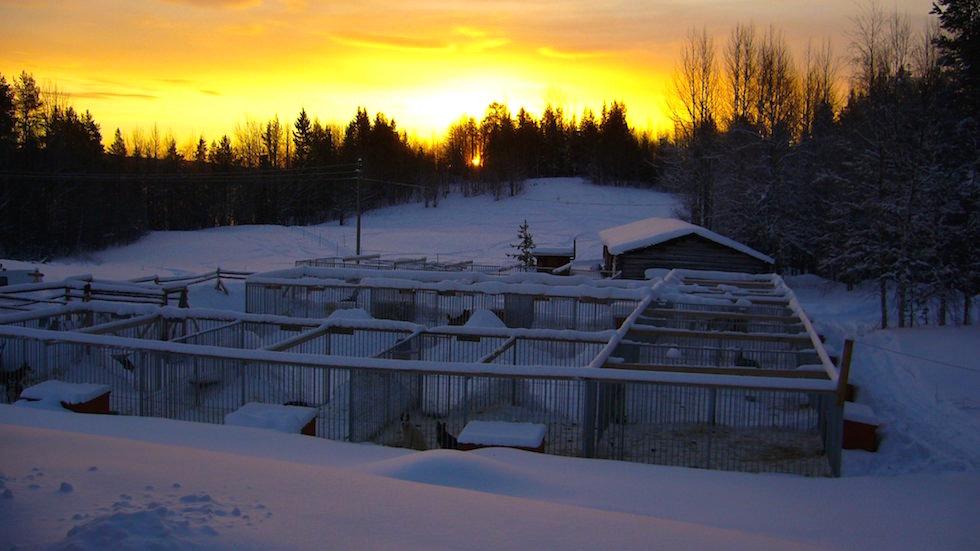 Zwinger bei sonnenaufgang in Schwedisch Lappland