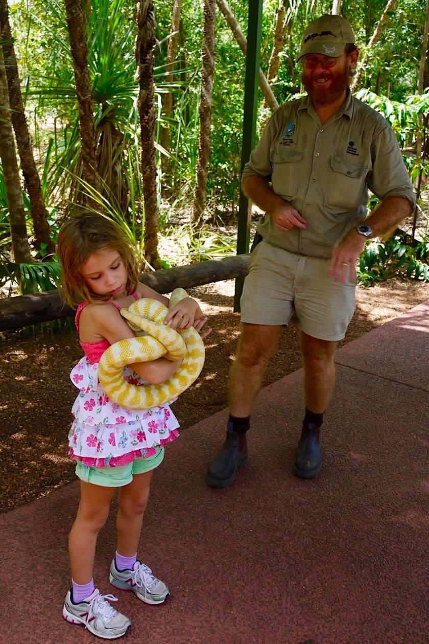 Mutig: Albino Tiger-Phyton auf dem Arm eines Kindes - Territory Wildlife Park - Northern Territory