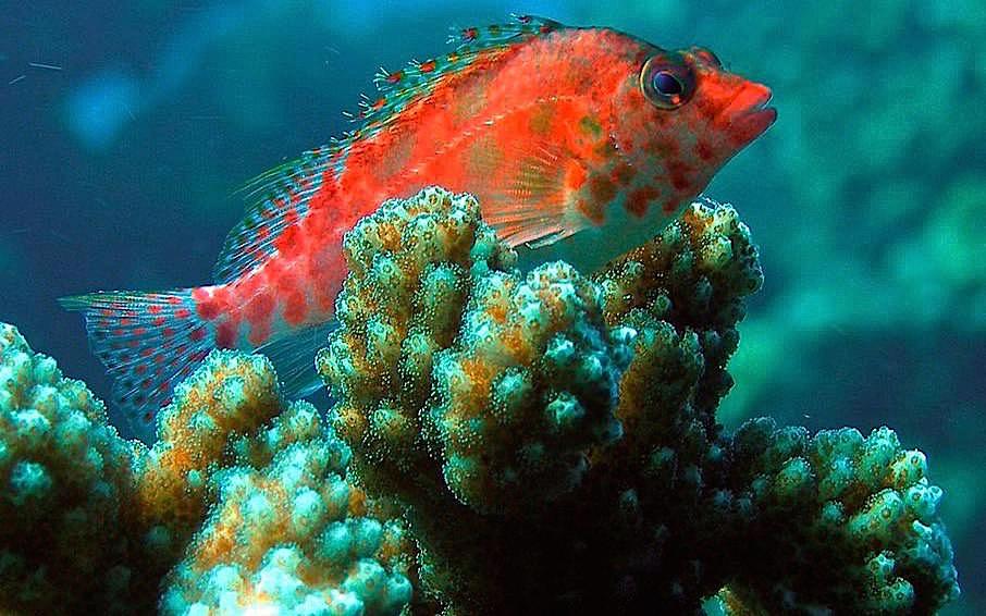 Cabo Pulmo - Tauchen im National Marine Park & Fisch-Vielfalt - Cortez Sea oder Golf von Kalifornien - Baja California