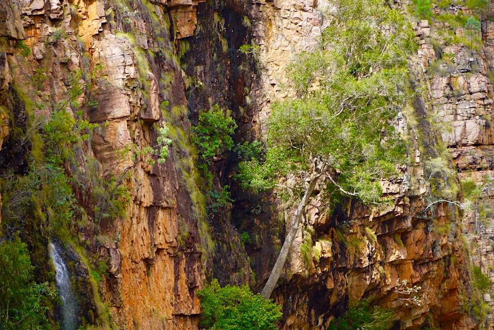 Katherine Gorge - Typisches Landschaftsbild: Steilwand, Baum & Wasserfall - Nitmiluk National Park - Northern Territory