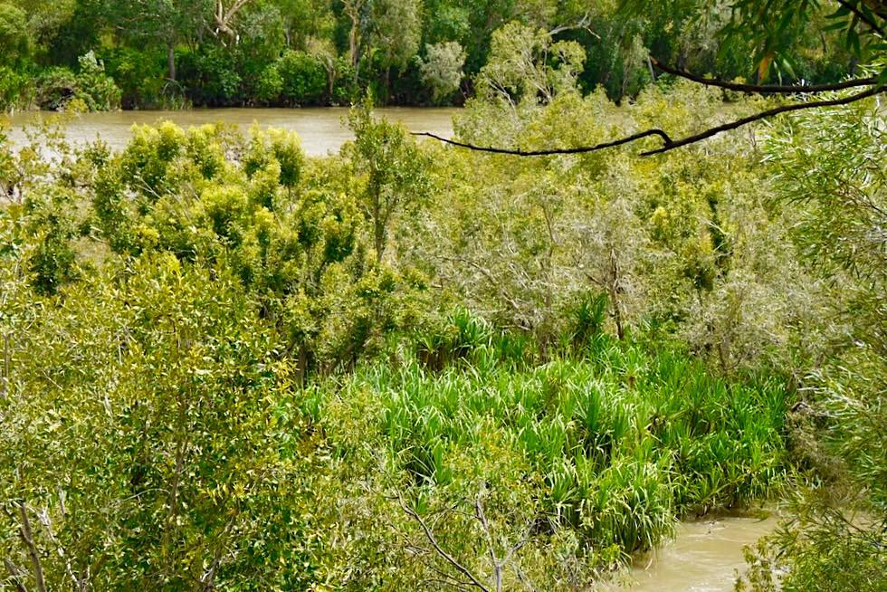 Katherine Gorge - Wandern unmöglich: Wanderwege Regenzeit - Nitmiluk National Park - Northern Territory