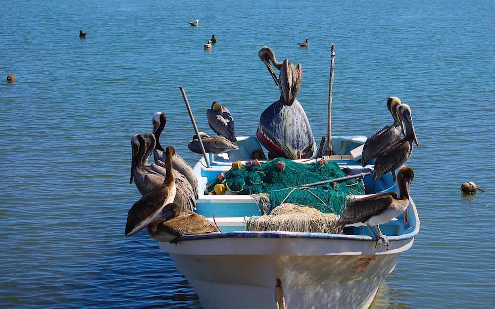 Am Hafen von Loreto Baja California