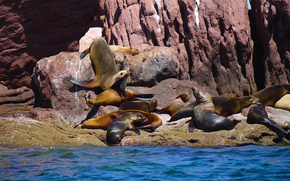 Seelöwen Felsen bei La Paz Baja Californien