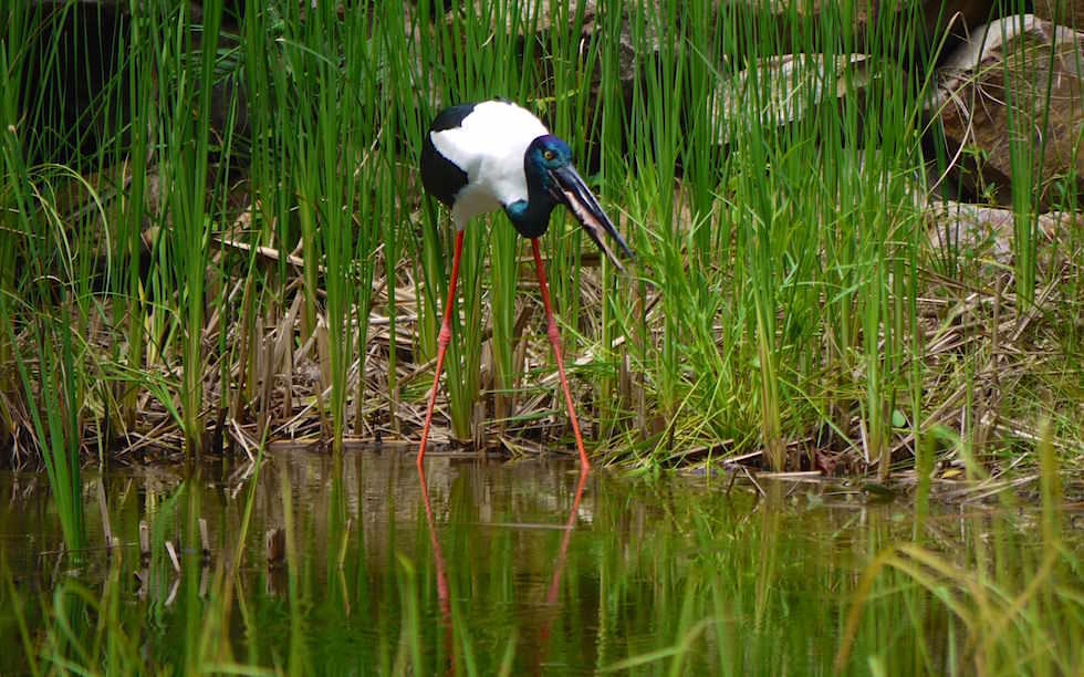 Territory Wildlife Park Northern Territory Australia
