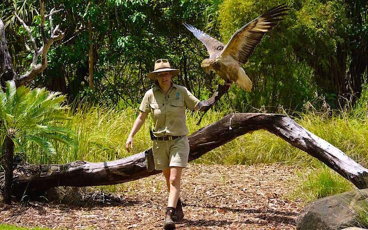 Greifvögel Territory Wildlife Park Northern Territory Australia