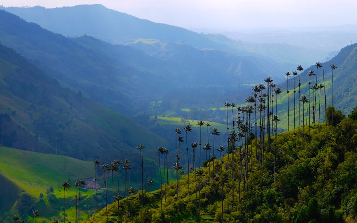 Valle del Cocora - Salento - Colombia