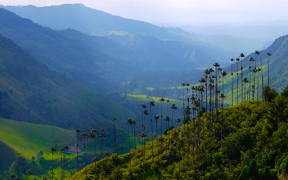 Valle del Cocora - Salento - Colombia