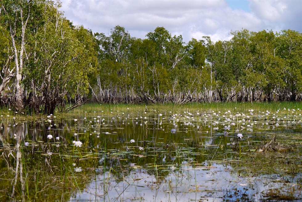 Litchfield Nationalpark: Tabletop Swamp - Northern Territory