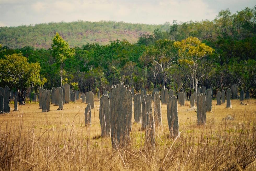 Lichtfield Nationalpark einer der schönsten Nationalparks: Magnetic Mounds zeichnen sich durch die besondere Bauweise der Termitenhügeln aus - Northern Territory