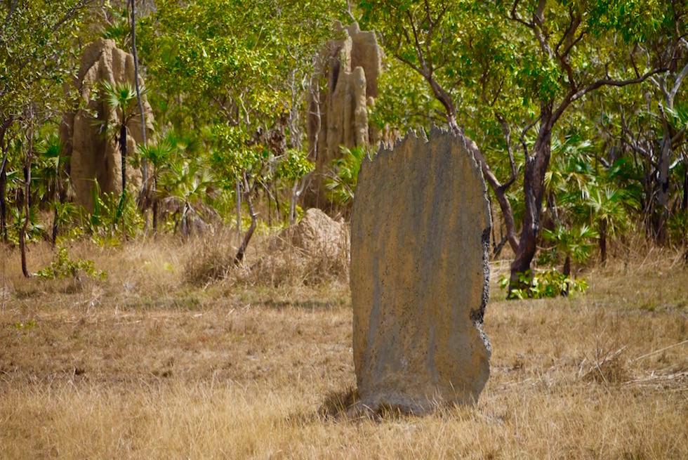 Litchfield National Park: Einmalig in Nord-SüdRichtung gebaute Magnetic Mounds (Termitenhügel) - Northern Territory