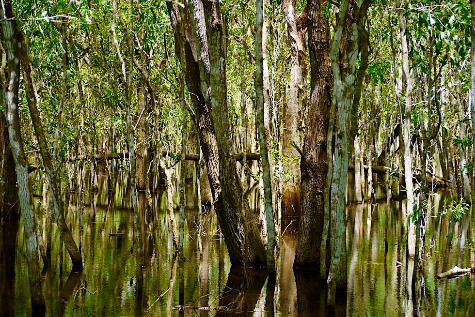 Faszinierende, verwirrende Wasserspiegelungen - Paperbark Walk - Territory Wildlife Park bei Darwin - Northern Territory