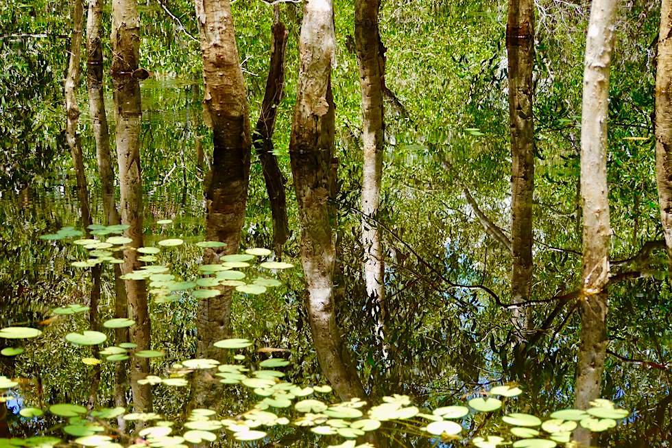 Paperbark Walk - Was ist unten, was oben? - Territory Wildlife Park - Northern Territory