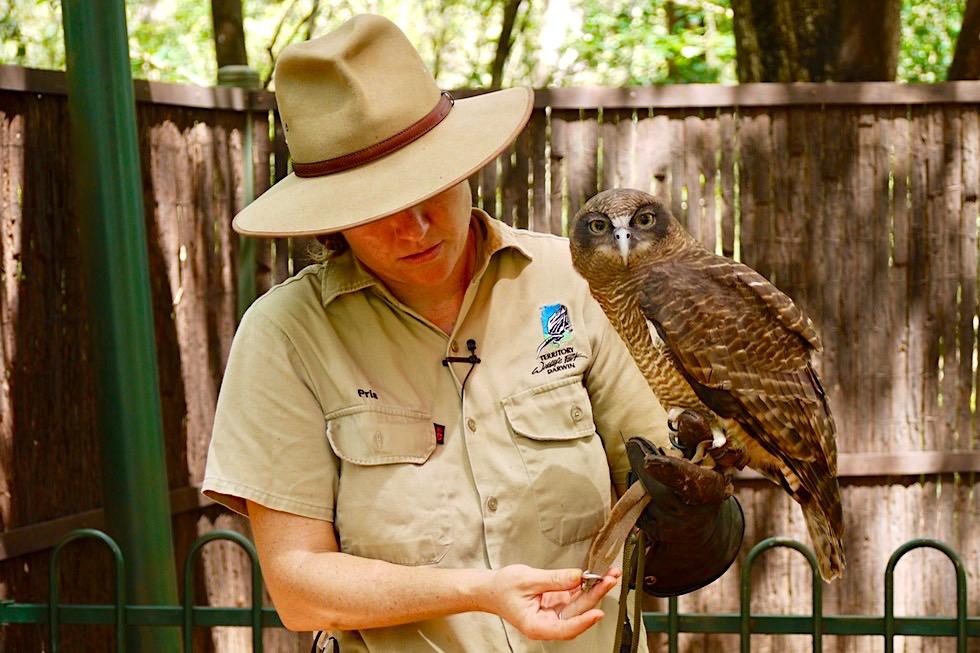 Rufous Owl - Käuze & Eulen - Territory Wildlife Park - Northern Territory
