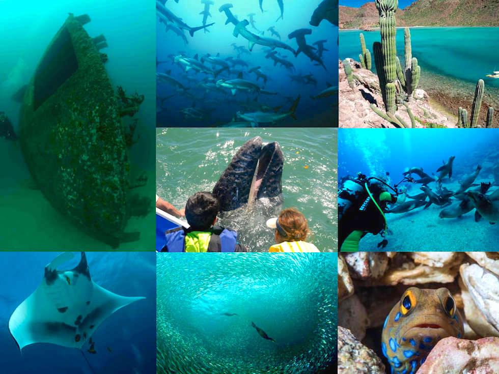Tauchen La Paz Baja California