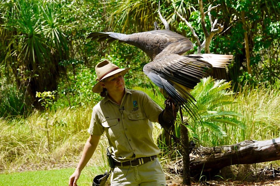 Territory Wildlife Park - Flight Desk: Keilschwanz-Adler bei der Vogelflugshow - Nahe Darwin, Northern Territory