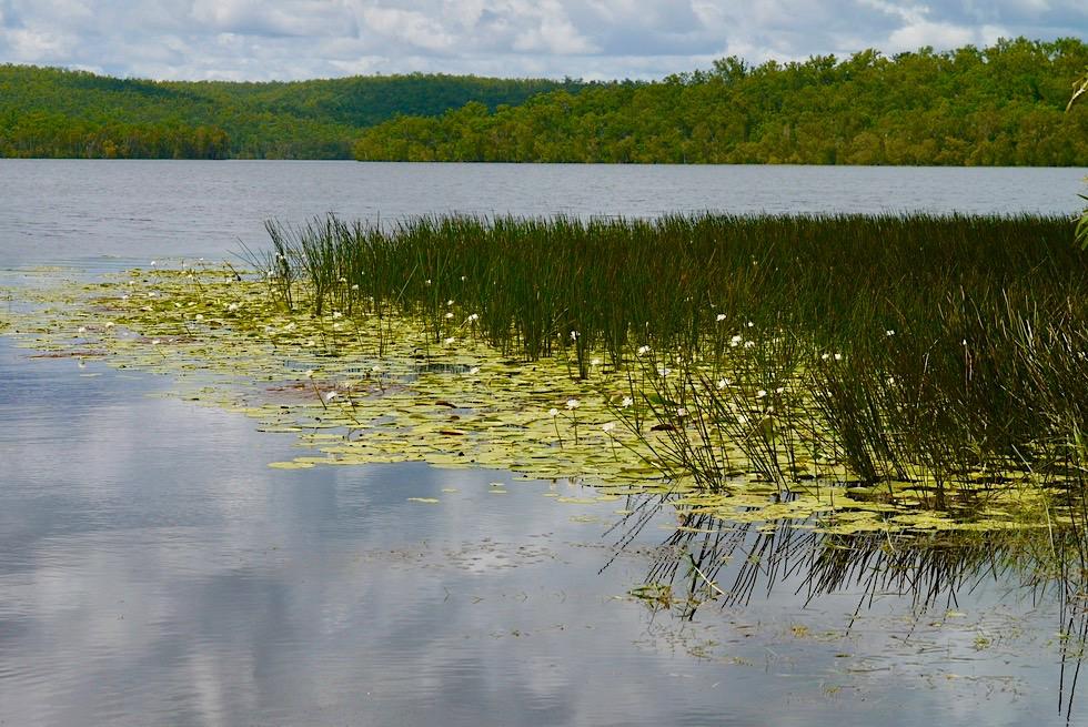 Territory Wildlife Park bei Darwin - Goose Lagoon - Northern Territory