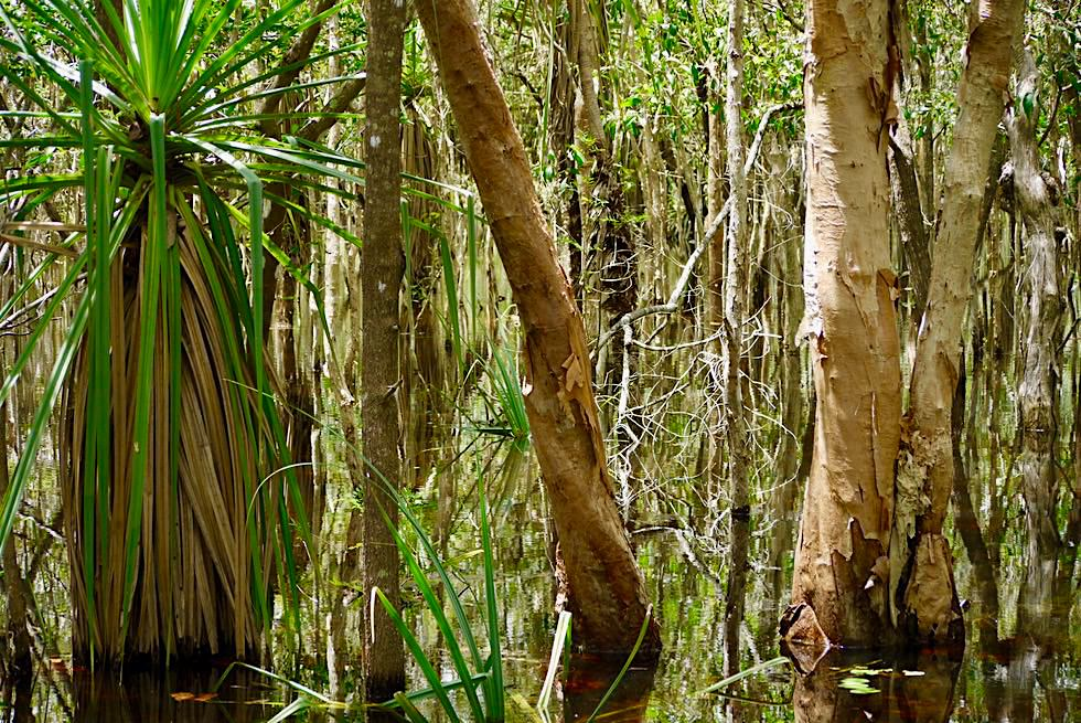 Territory Wildlife Park - Paperbark Walk - Northern Territory
