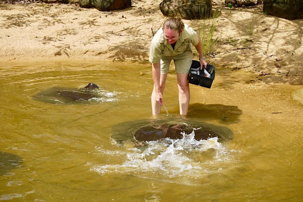 Territory Wildlife Park bei Darwin - Jede Menge Action bei der Rochen Fütterung - Northern Territory