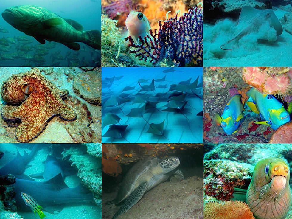 Grandioser Fisch-Artenreichtum in der Cortez Sea bzw. dem Golf von Kalifornien - Baja California