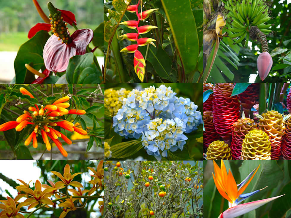 Blumen - Salento Kolumbien