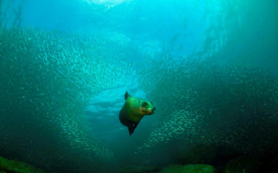 Tauchen mit Seelöwen in La Paz - Baja California - Mexiko