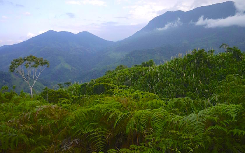 Cuidad Perdida Trekking View 2 Colombia