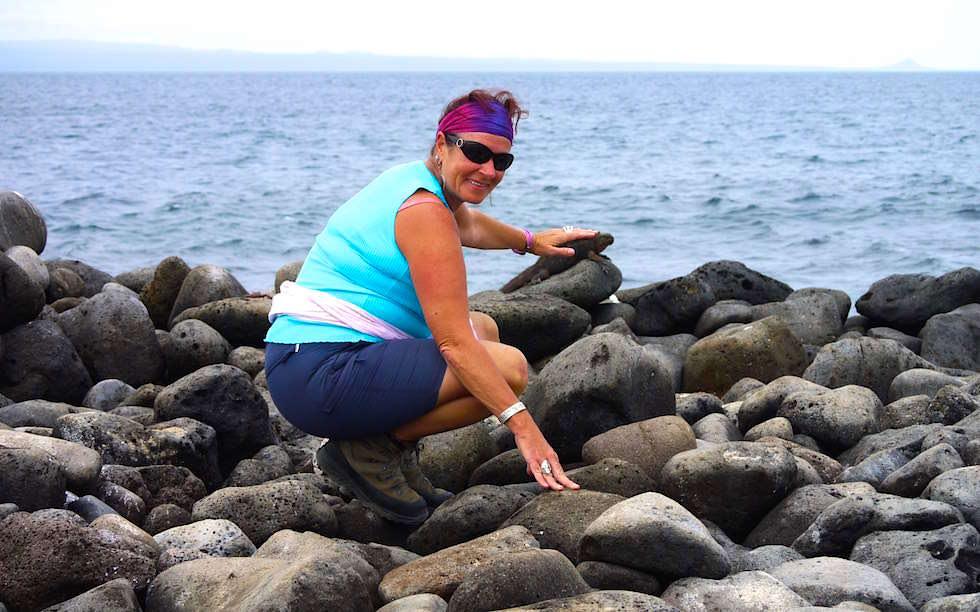 Galapagos - North Seymour - Meerechsen