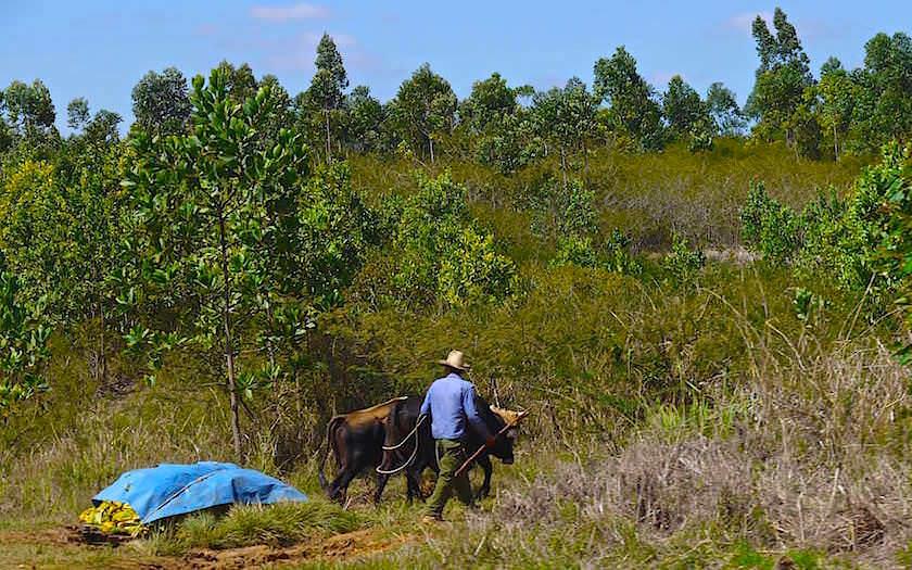 Feldarbeiter Vinales Kuba