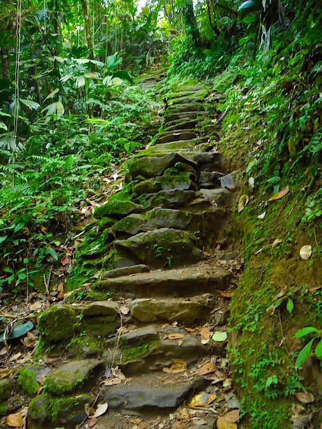 Stairway Cuidad Perdida Trekking Colombia