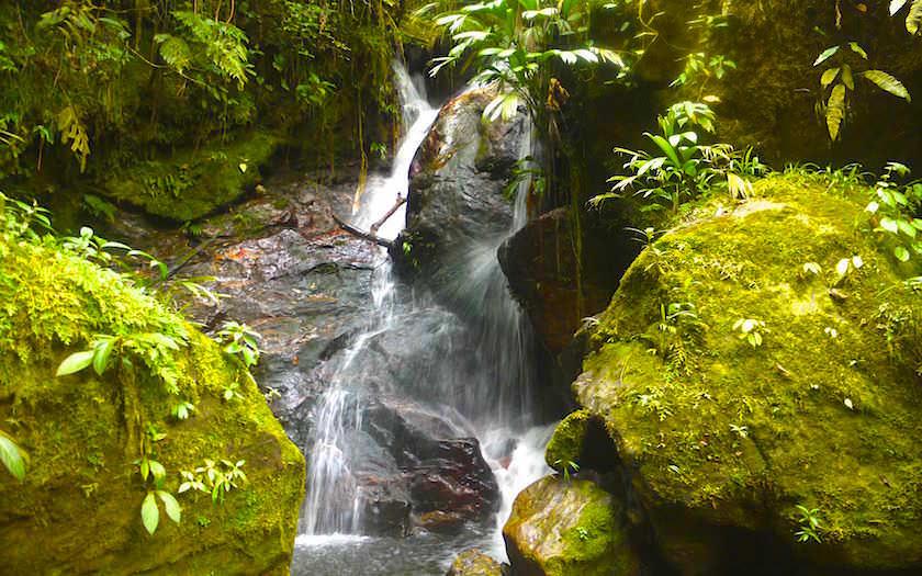Trekking near River Cuidad Perdida Colombia