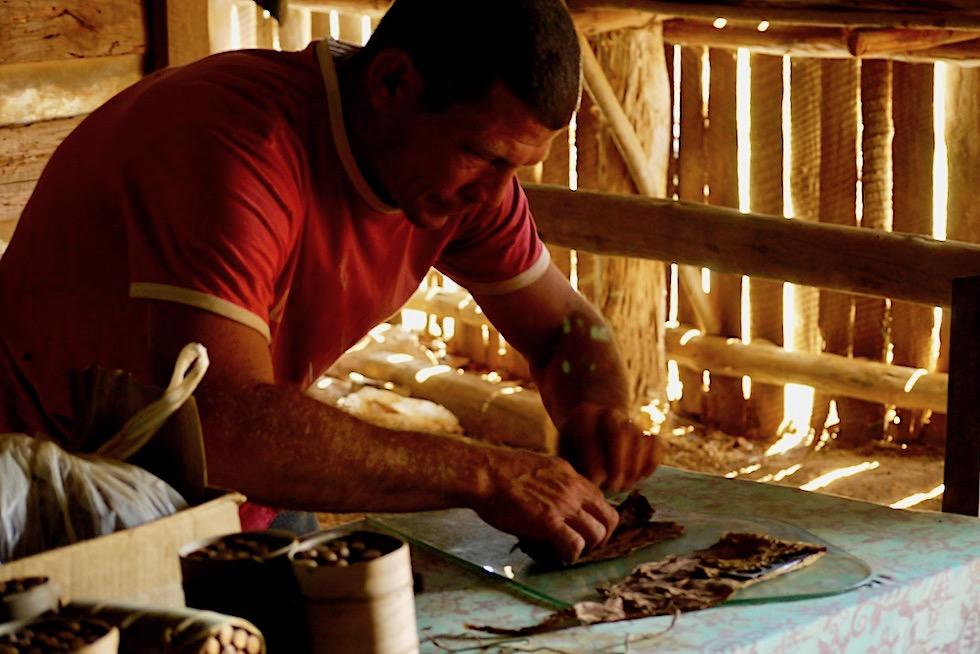 Vinales - Tabakbauer zeigt wie Zigarren gedreht werden - Kuba