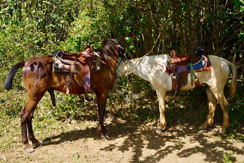 Vinales Tal - Pferdeausritt zu den Cuevas del Indio - Kuba